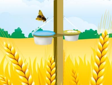 Recenser les pollinisateurs - Etape 2