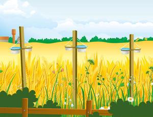Protocole Relevés pollinisateurs 1ère étape: les bols