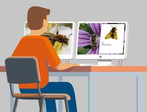 Protocole Relevés pollinisateurs 4ème étape - Modélisation