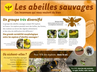 Poster Abeilles Sauvages