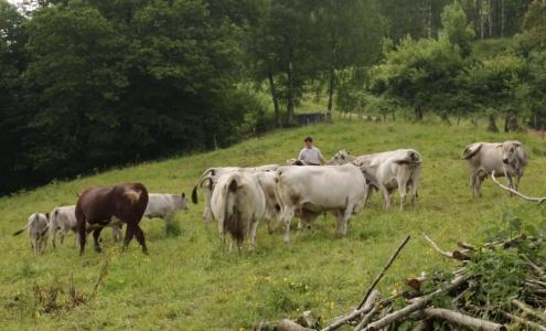 """Image extraite de la vidéo """"relocalisation de l'agriculture"""" du dictionnaire d'agroécologie"""