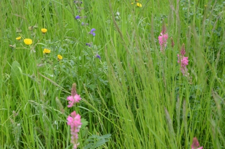 Prairie à flore variée - image extraite du dictionnaire d'agroécologie